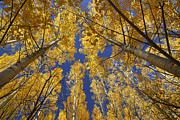 Yellow Leaves Prints - Looking for de sun II Print by Guido Montanes Castillo