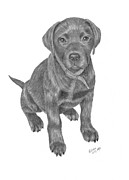 Chocolate Lab Drawings - Looking for Dinner by Patricia Hiltz