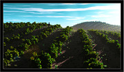 Vineyard Landscape Mixed Media Framed Prints - Looking out over the Valley... Framed Print by Tim Fillingim