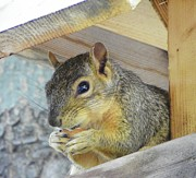 Squirrel Mixed Media - Looking Out - Tree House by Photography Moments - Sandi