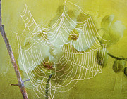 Spider Digital Art Prints - Looking Through The Web Flower Print by J Larry Walker