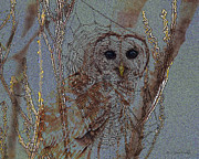 Barred Owl Digital Art Framed Prints - Looking Through The Web Framed Print by J Larry Walker