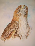 Red-tailed Hawk Paintings - Looking Toward the Future by Nicole Angell