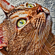 Kitten Digital Art - Looking Up by David G Paul