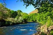 Fishing Creek Prints - Looking Up Pine Creek Print by Robert Bales