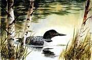 Robert Stump - Loon and Birch