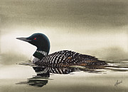 Loon Painting Framed Prints - Loon in Still Waters Framed Print by James Williamson