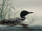 Loon Painting Framed Prints - Loon Near the Shore Framed Print by James Williamson