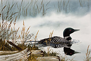 Loon Painting Framed Prints - Loons Misty Shore Framed Print by James Williamson