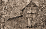 Wooden Barns Prints - Lost and Found Sepia Print by JC Findley