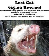 Lost Cat Cash Reward Print by Michael Ledray