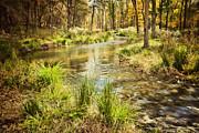 Lost Creek In Autumn Morning Print by Iris Greenwell