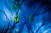 Linda Unger - Lost in Blue
