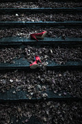 Shoe Photos - Lost Shoes by Joana Kruse