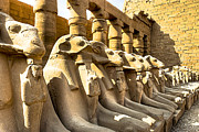 Egyptology Posters - Lost Sphinxes of Thebes - Karnak Temple Poster by Mark E Tisdale