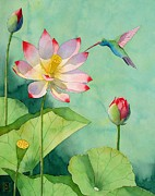 Watercolor  Paintings - Lotus And Hummingbird by Robert Hooper