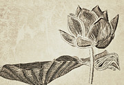 Neutral Drawings Posters - Lotus Flower and Leaf Poster by Patricia Januszkiewicz