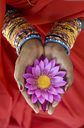 Indian Girl Photos - Lotus Offering by Tim Gainey