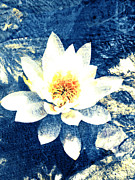 White Lotus Posters - Lotus on Blue Poster by Ann Powell