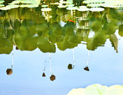 Lotus Pond Framed Prints - Lotus Pond Framed Print by Nian Chen