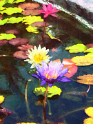 Designs By Susan Prints - Lotus Pond Print by Susan Savad