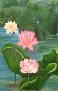 Featured Originals - Lotus Pond by Virginia Selley