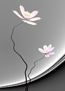Lotus Twins Print by GuoJun Pan