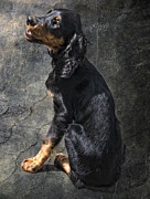 Gordon Setter Prints - Louis Print by Joachim G Pinkawa