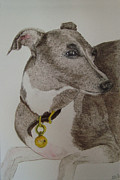 Greyhound Mixed Media Framed Prints - Louis Framed Print by Karen Coggeshall