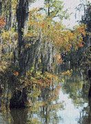 Louisiana Bayou Foliage In Early October Print by Andrew Govan Dantzler