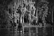 Louisiana Bayou Print by Mountain Dreams