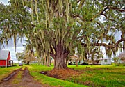 Live Oaks Digital Art Framed Prints - Louisiana Country oil Framed Print by Steve Harrington