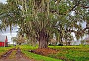 Country Driveway Photo Posters - Louisiana Country Poster by Steve Harrington