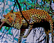 Cheetah Digital Art Posters - Loungin Leopard Poster by Byron Fli Walker