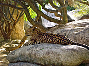 Lounging Digital Art Posters - Lounging Leopard in The LIving Desert in Palm Desert-CA Poster by Ruth Hager