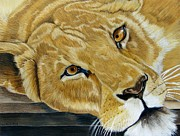 Lea Sutton - Lounging Lioness