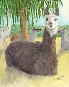 Lounging Framed Prints - Lounging Llama Herd Camelid Farm Animals Art Framed Print by Cathy Peek