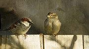 Sparrows Photos - Love Birds by Rebecca Cozart