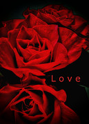 Dozen Red Roses Posters - Love Poster by Todd and candice Dailey