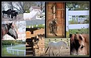 Rosanne Jordan - Love Horses