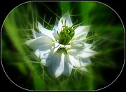 Patti Whitten - Love In A Mist