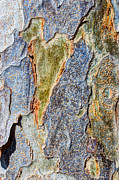 Bark Design Photos - Love In The Abstract  by Heidi Smith
