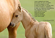1 Corinthians 13:4 Framed Prints - love is gentle love is kind Horse and colt Framed Print by Mark Duffy