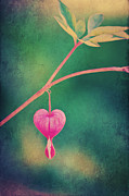 Angela Doelling AD DESIGN Photo and PhotoArt - Love is in the air...