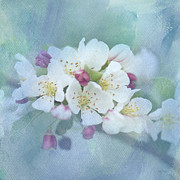 Crab Apple Tree Blossoms Prints - Love Is In The Air Print by Betty LaRue
