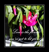 Easter Cactus Art Framed Prints - Love is the Flower Youve Got to Let Grow Framed Print by Barbara Griffin