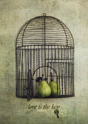 Bird Cage Framed Prints - Love is the key with typo Framed Print by Priska Wettstein