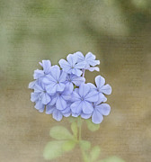 Blue Flowers Photos - Love Letter by Kim Hojnacki