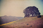 Oak Trees Prints - Love Lifts Us Up Print by Laurie Search