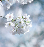 Sakura Photo Prints - Love Must Be Print by Kim Hojnacki